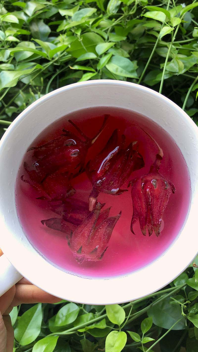 elisa_chanan-chas-hibiscus