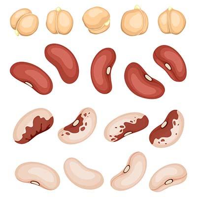 elisa-chanan-remolho-beans